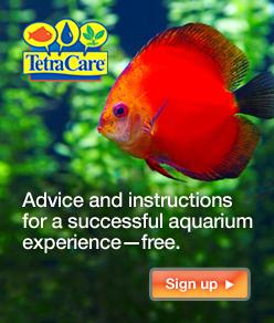 Tetramin Tropical Flakes Tetra Aquarium