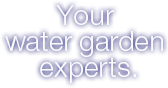 Your water garden experts.