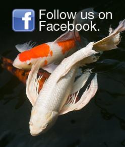 Algaecontrol tetra aquarium for Ornamental fish pond maintenance