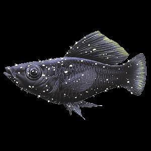 Aquarium fish diseases and how to spot them tetra aquarium for What is ick in fish