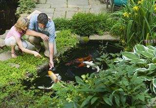 Pond building where to put a pond location tetra aquarium for What fish should i put in my pond