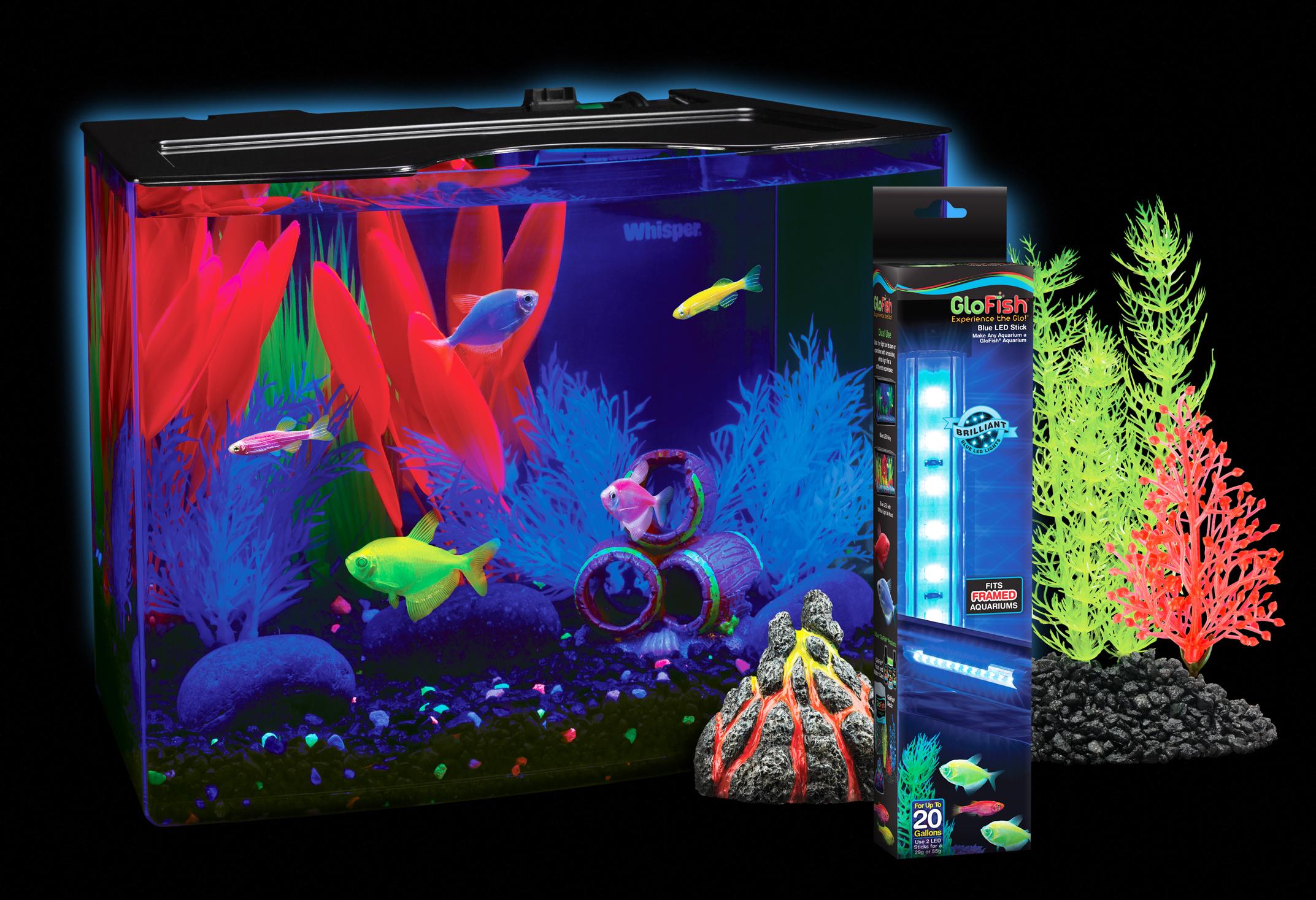 glofish tank